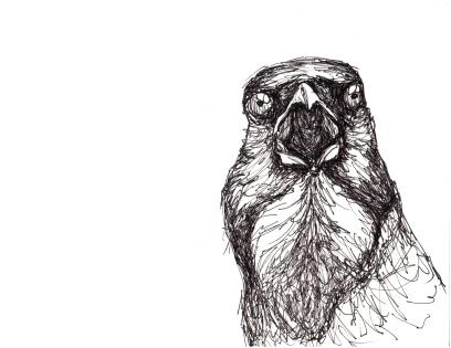 Crow Cry
